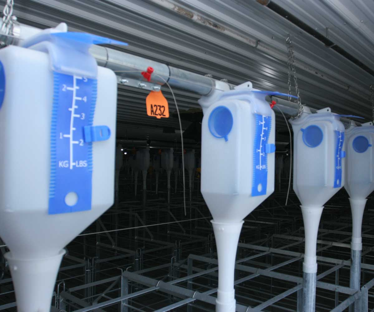 GrowerSELECT® Sow Drop feeders installed on Grow-Disk feed pipe in a gestation barn feeding installation.